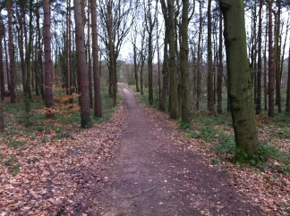 Pleasley Woods