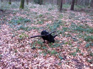 Carrying a favourite stick home