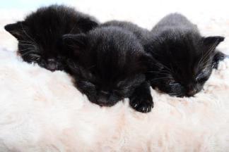 3 kittens needing a home