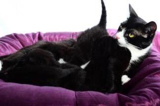 Kittens & mum